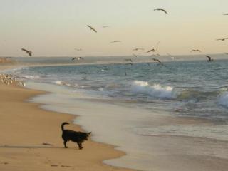 Португалия, Кошта Капарика. История вторая. Про рыбаков и их собак